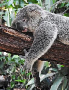 Schlafstörungen loswerden